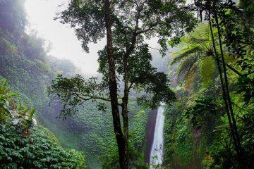 מה אפשר לעשות כדי להציל את יערות הגשם?